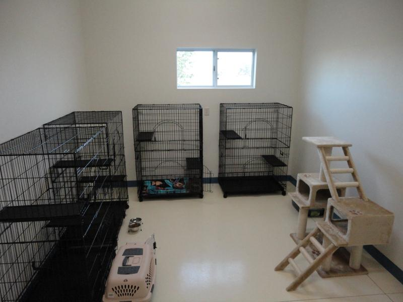 happy tails cat room